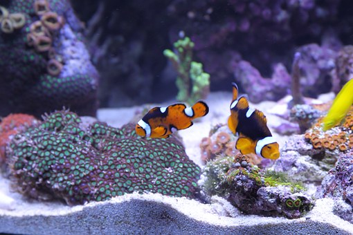 Fresh Water Aquarium Cleaning Is Easier Than Cleaning A Water Tank