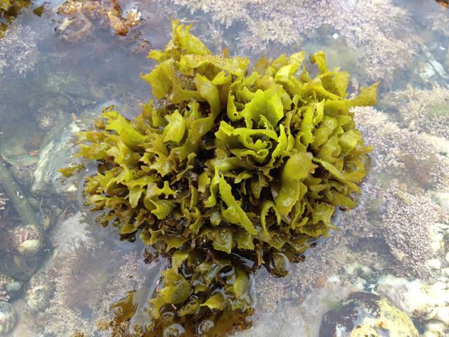 How To Remove Sea Weeds From  Your Fish Tank