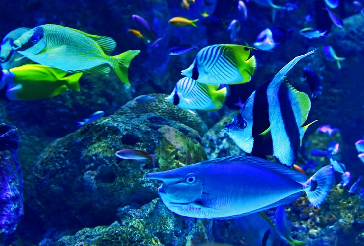 Tips On How To Clean An Aquarium