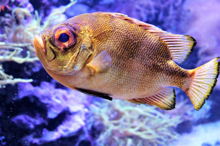 Great Facts About Cichlid Fish