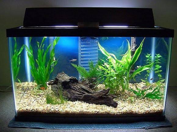 Best Decorations For Your Aquarium