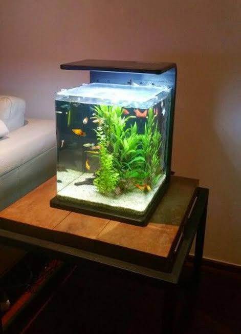 Aquarium Design - Some Tips On Choosing The Best