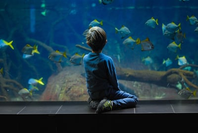 Aquariums - Learn How To Have Yours