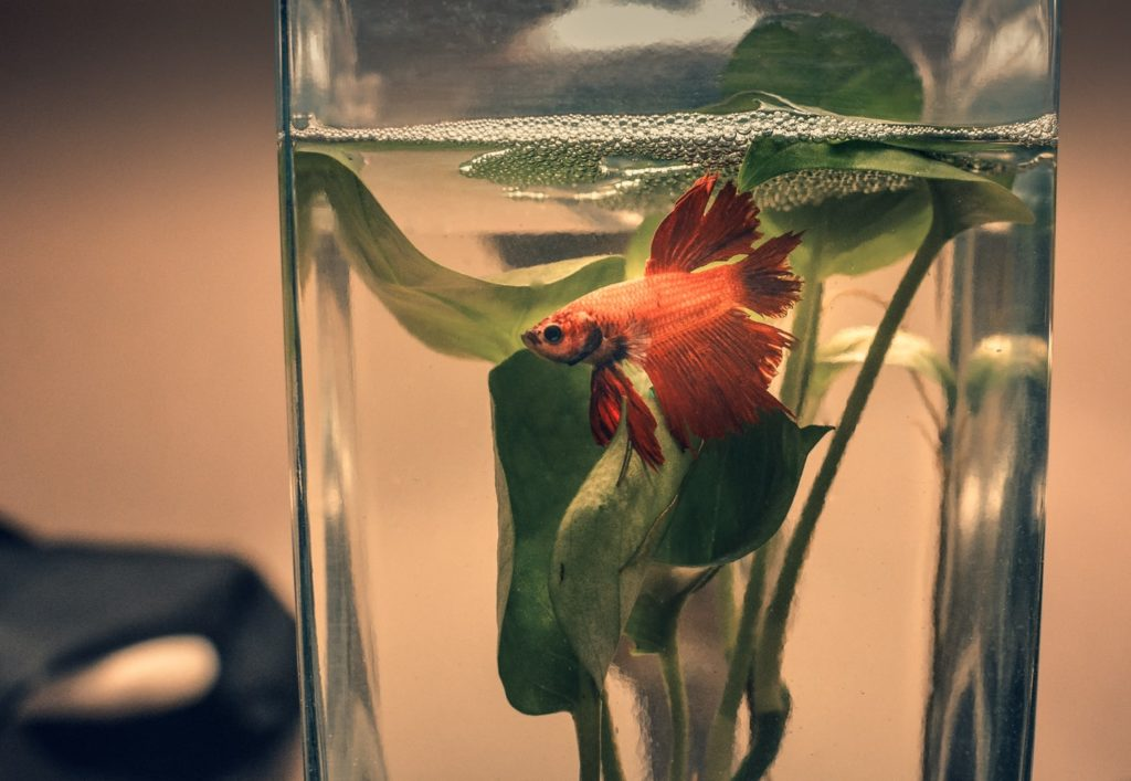Fish Tanks -  Advantages And Disadvantages Of It